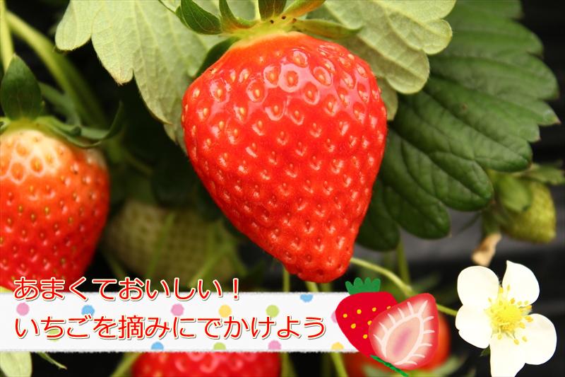 画像 048_R-4