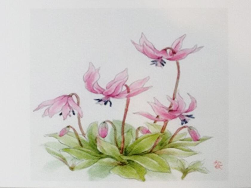 花の絵水彩画展 ~万葉の花を描く~