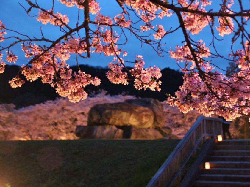 2021 石舞台古墳夜桜ライトアップ